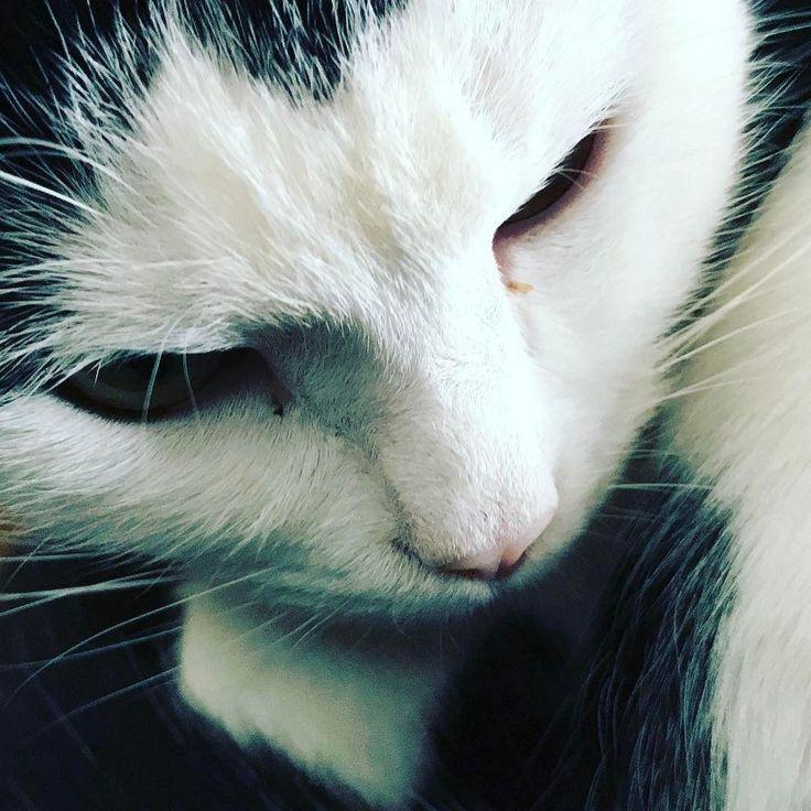 Missy! #CatsOfInstagram #CatsOfTwitter