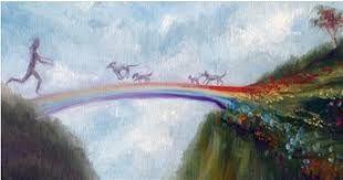 Resultado de imagen para puente del arco iris gatos