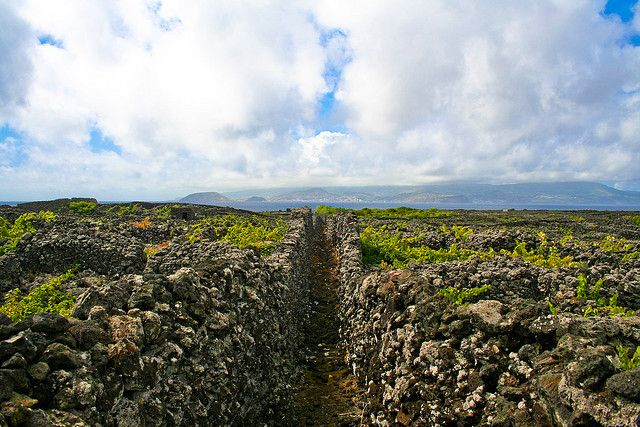 8 of the most unique walking paths in the world...The Azores (Pico island) made the list.  :-)  I have several of these places on my list of places to go.