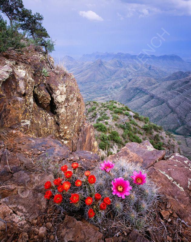 1548 best texas images on pinterest texas travel park for Landscaping rocks corpus christi
