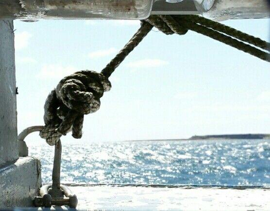 #seahouses #boattrip #sealife #ahoy