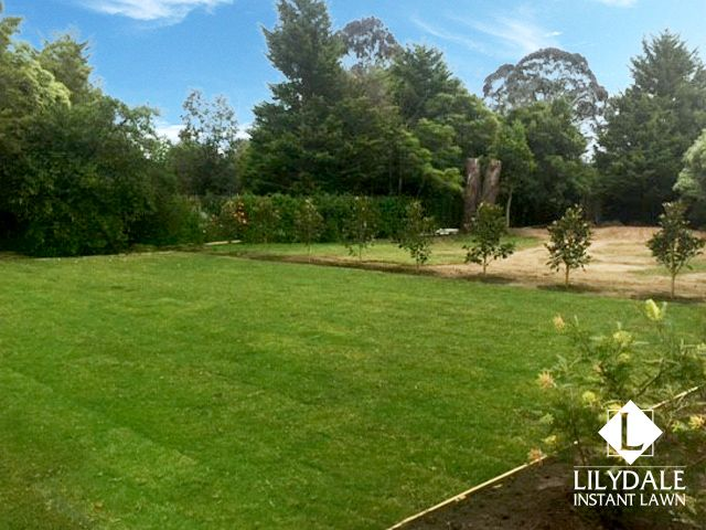October - 2016 - Monthly Home Owners Competition Winner - Lilydale Instant Lawn Care | Love your lawn | Great grass | Lily & Dale | Follow us | Garden Tips & Advice | Contact us | Lawn Solutions Australia  Lawn Supplier | Instant Turf |Sir Walter Buffalo DNA Certified | Lawn Solutions Australia | Online Store | Local Pick up & Delivery | Lawn Care | Turf Farm | Melbourne | Victoria | Garden | Grass