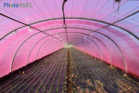 serre horticole rose