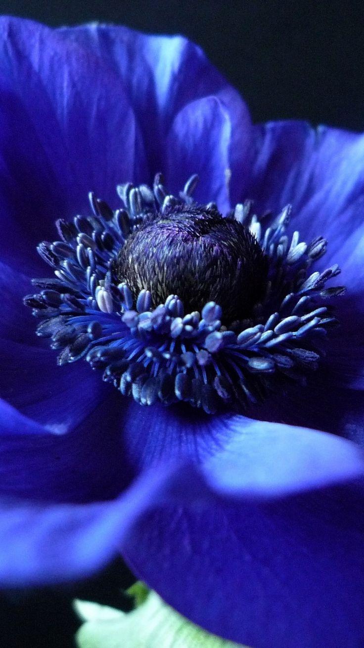 картинки божественного синего и черного цвета сетка нетканая виниловая