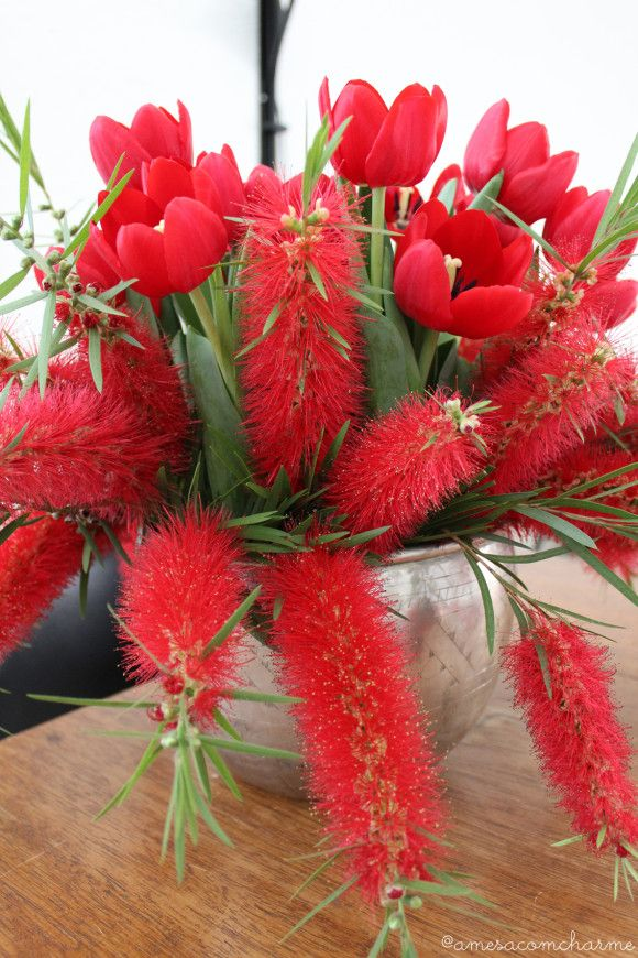 Red arrangement, tulips and bottlebrushes