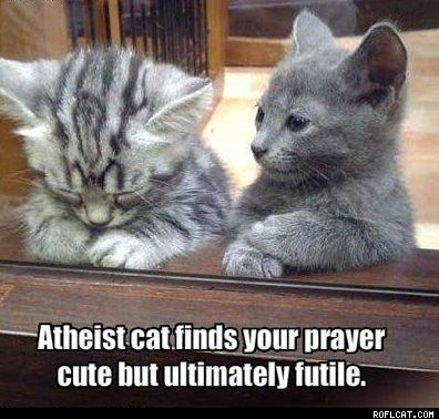 lol: Cats, Animals, Kitten, Stuff, Pet, Funny, Things, Kitty, Friend