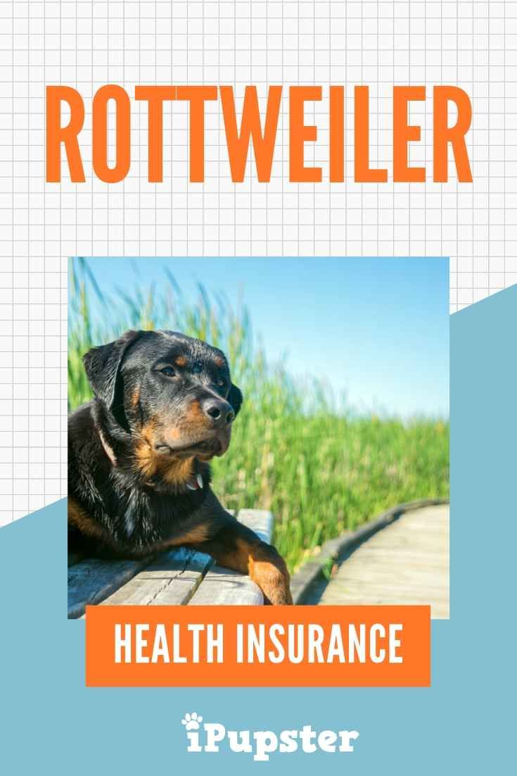 Is Rottweiler Insurance Cover Worth The Cost Best Health Insurance Cheap Pet Insurance Health Insurance