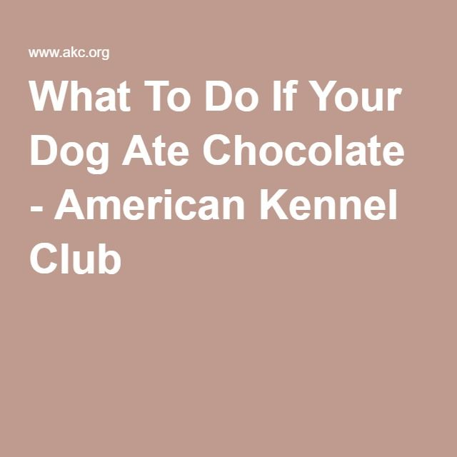 What To Do If Your Dog Ate Chocolate - American Kennel Club