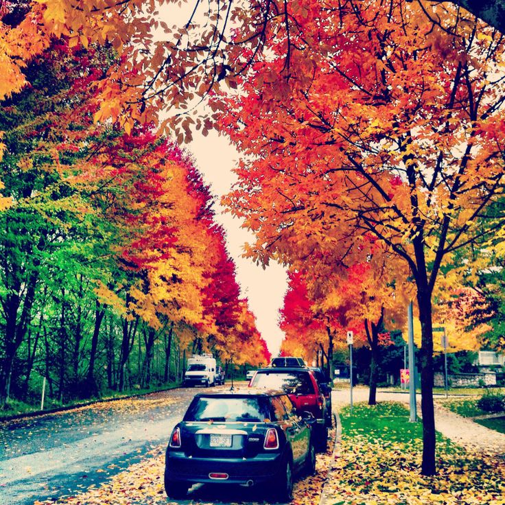 Fall in Vancouver/Canada