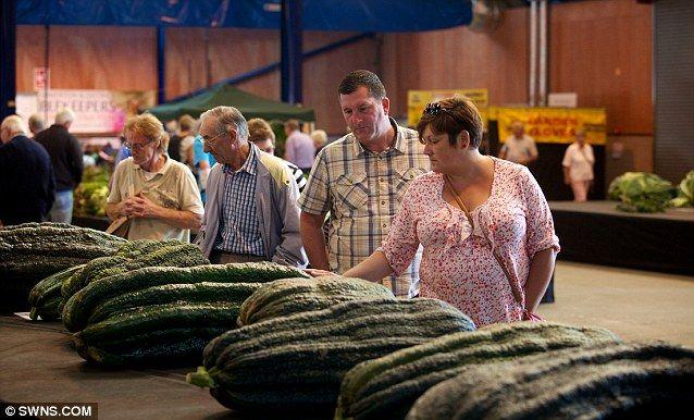 Giant zucchini!