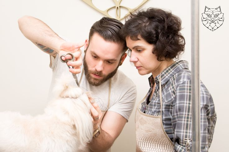 Escuela Nicolás Herrero, formación en peluquería canina, diferentes métodos y técnicas, método 100% práctico. Cursos peluquería canina MADRID
