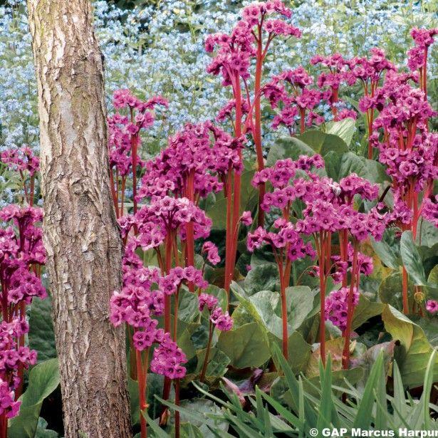 331 best les jardins de ma - couvre-sols, ground covers images on