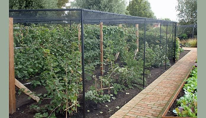 Alongside supplying alot of standard and bespoke crop protection systems for the uniquely designed kitchen garden we were asked to design and manufacture a bespoke fruit cage to fit an area of soft fruits bordered by paths that cut across the garden.