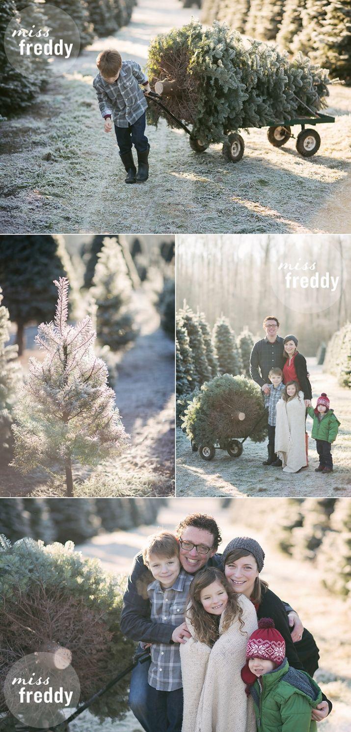 A Christmas tree farm photo shoot? What a cute setting for ...