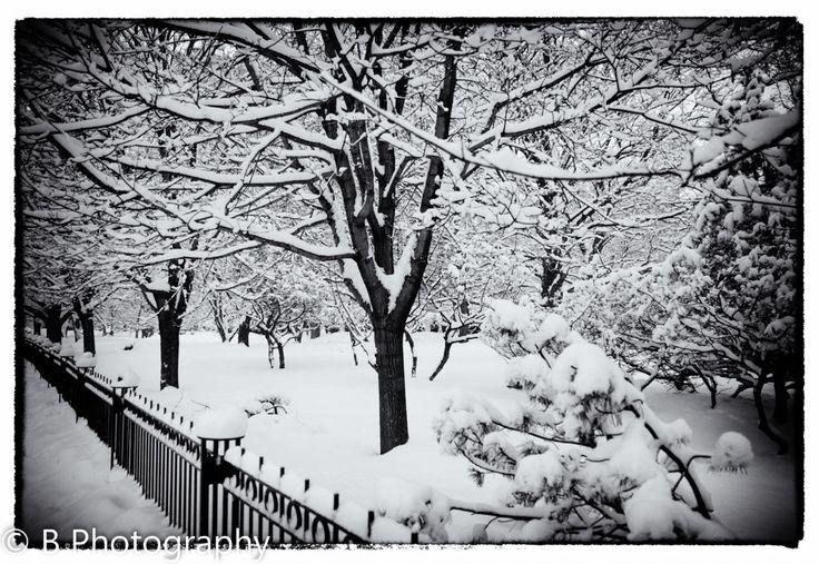 Ottawa, Ontario - Snowy Winter Day