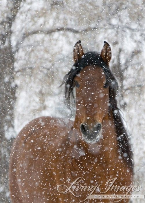 Snow Stallion  Fine Art Horse Photograph by WildHoofbeats on Etsy, $35.00
