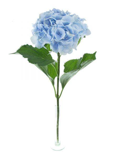 41 best images about hortensien on pinterest florists. Black Bedroom Furniture Sets. Home Design Ideas