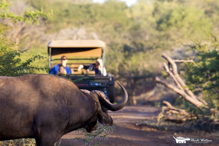 Game Drive at Rhino River Lodge