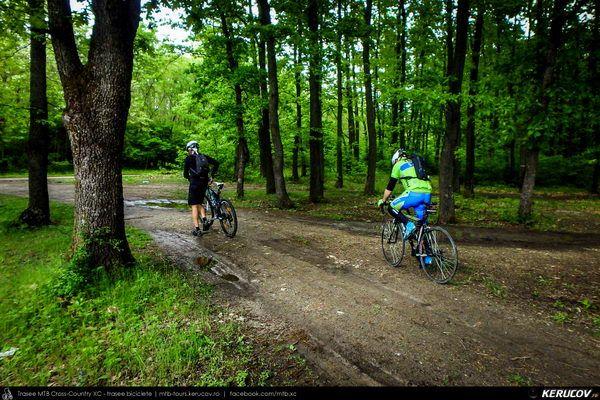 Traseu cu bicicleta SSP Bucuresti - Colibasi - Comana - Vlad Tepes - Gradistea - 1 Decembrie - Bucuresti (bujorul de padure in Parcul Natural Comana), Judetul Giurgiu, Romania. Tura cu bicicleta in apropiere de Bucuresti. Parcul Natural Comana. In cautarea bujorul de padure. Bujorul romanesc. Primavara. Mai. Asfalt. Vreme instabila. Locuri cunoscute. Drumuri. Soare, nori si putin vant. Bujorul de padure in Parcul Natural Comana (...)