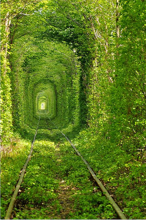 A stunning, vibrant green tunnel...