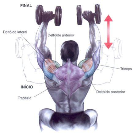 Sequência de exercícios para Ombros SHOULDER PRESS COM HALTERES FIXOS Modo de execução: Sente-se num banco e coloque os halteres de forma