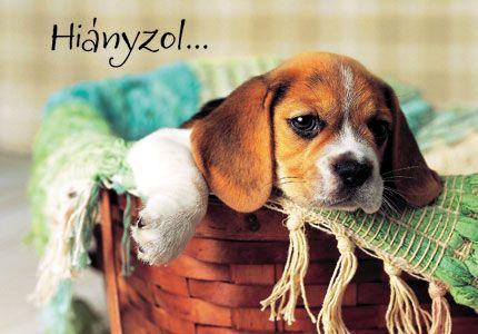 Hianyzol Kepek - Bing Képek