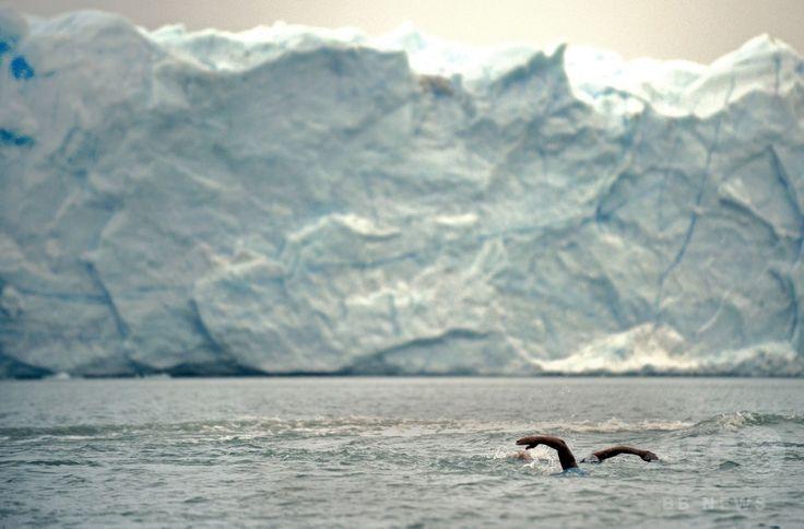 アルゼンチン・サンタクルス(Santa Cruz)州のアルヘンティーノ湖(Argentino Lake)で行われた寒中水泳大会の参加者ら(2014年8月8日撮影)。(c)AFP/DANIEL GARCIA ▼9Aug2014AFP|見るだけで涼しくなる?アルゼンチンで寒中水泳レース http://www.afpbb.com/articles/-/3022716 #Argentino_Lake #Perito_Moreno_Glacier #Winter_swimming
