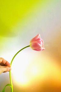 20160311141923-tn_flower2