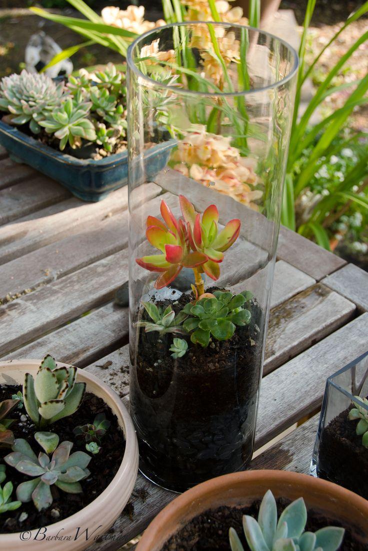 Tall Cylinder: Cylinder Terrarium, Flowering Plants, Garden Terrarium, Air Plants, Cylinder Succulents, Tips, Garden Plants