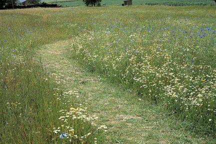 To look their best, meadows need careful maintenance. Credit: RHS/Tim Sandall.