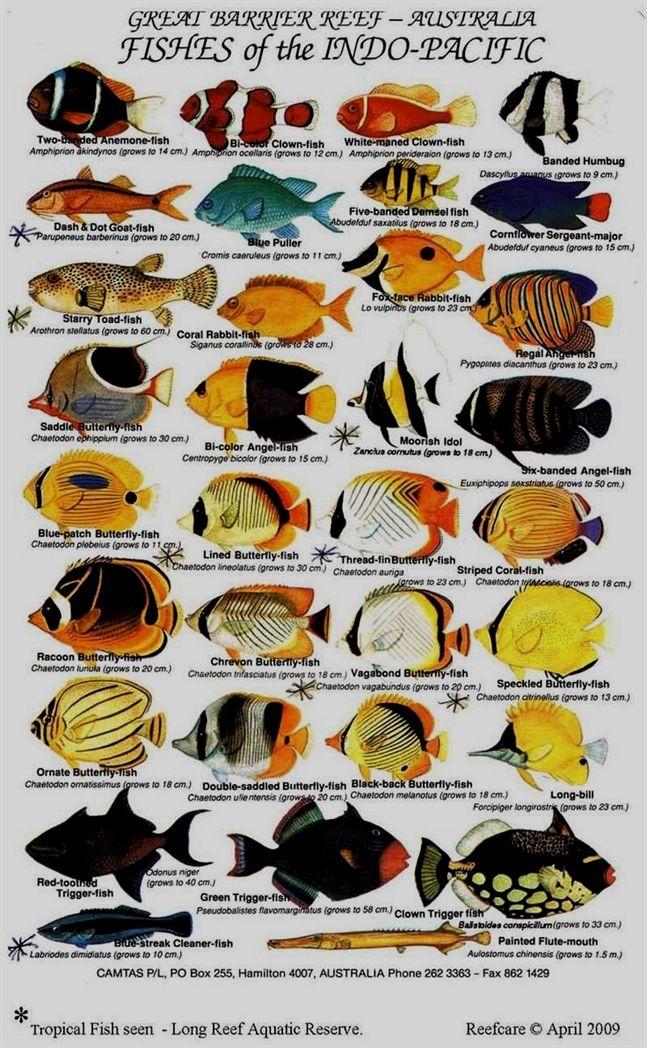 Saltwater Aquarium Fish Guide Saltwater Aquarium Fish Marine Fish Tropical Fish