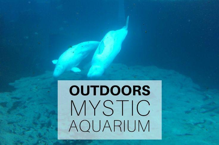 Outdoors: Mystic Aquarium, Connecticut http://mumturnedmom.com/2017/05/17/outdoors-mystic-aquarium-connecticut/
