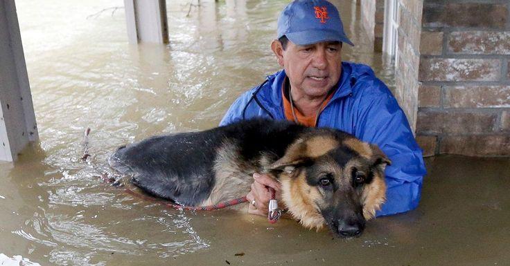 Saving animals in time of need. Hurricane Harry 8-17