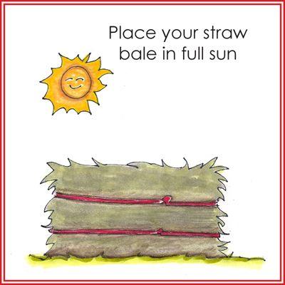 Straw bale gardening how to