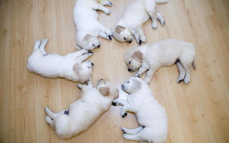 Uyuyan Köpek Yavruları | Sleeping Puppies