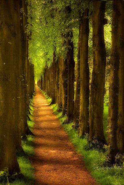 walk the path through tall trees