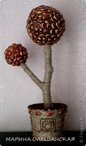 Small Pistachio Shell tree