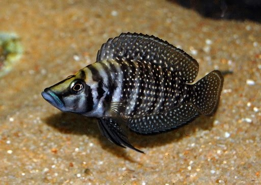 2482 best fishes images on pinterest for Weird freshwater fish