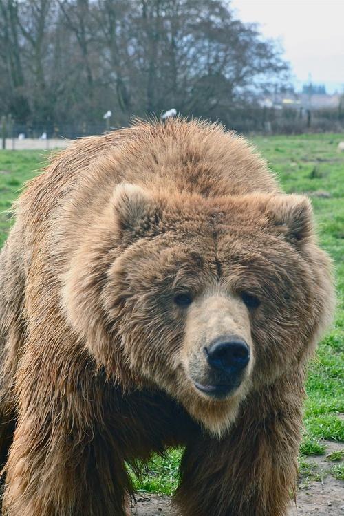 bear. love you.