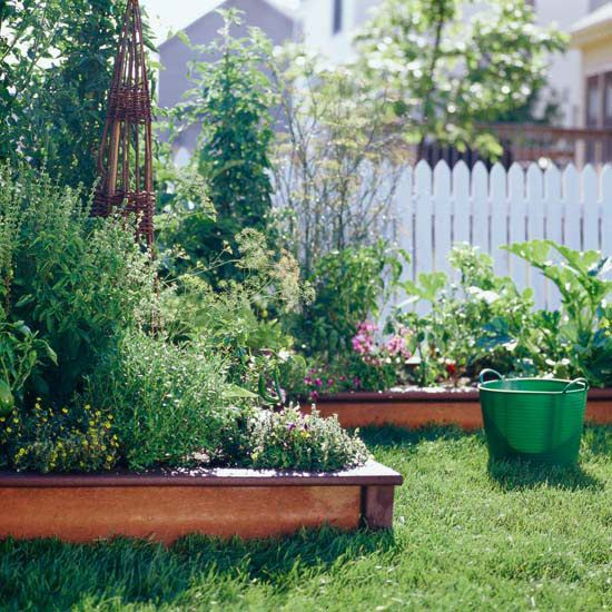 how to stop tree roots from invading raised beds