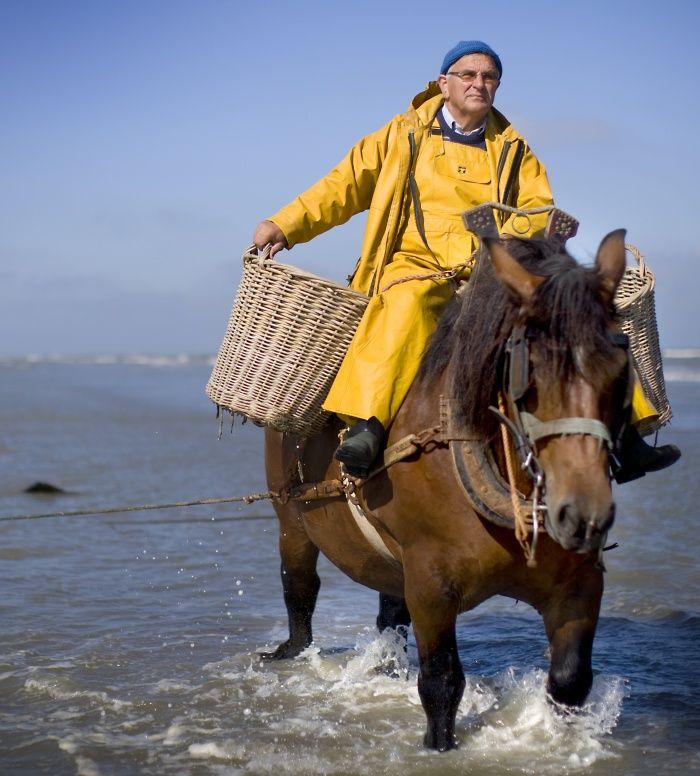 De garnaalvissers te paard van Koksijde-Oostduinkerke