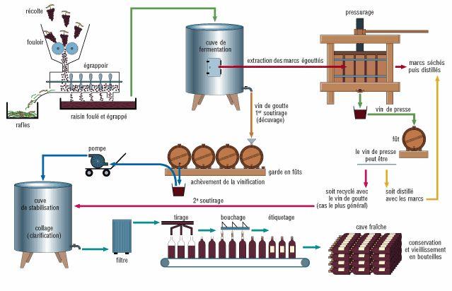 Wine making process | Wine Technical info | Pinterest | French ...