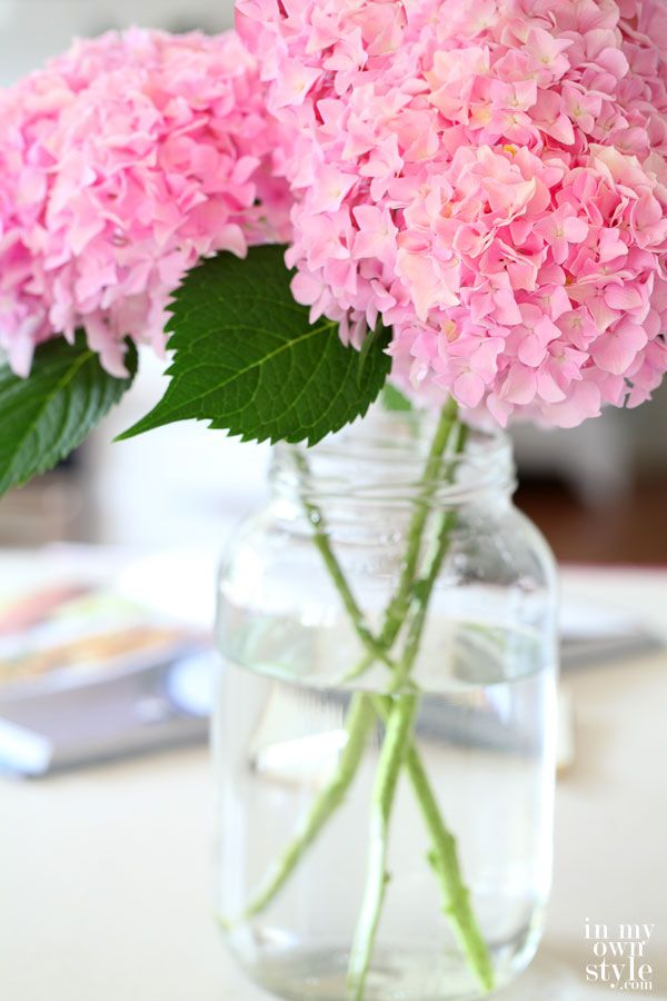 How to Cut Hydrangeas So They Won't Wilt - In My Own Style. And how to make them more purple.