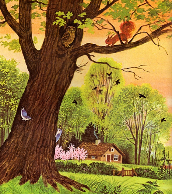 """""""Stories from Nature"""" by Jane Werner Watson, illustrated by Gerda Muller (1973)"""