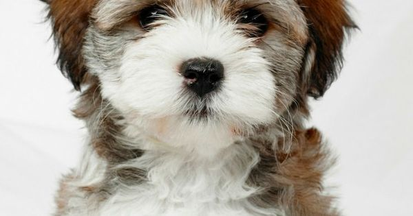 Puppy Food is going to be deciding factor of your puppy's health. You should never ignore it a good puppy food contains a lot of proteins... | Best Dog Food | Best Dog Food for Puppies | Orijen Dog Food | Best Dog Food Brands | Homemade Dog Food | Healthy Dog Food | Dry Dog Food | Puppy Training comes later food first |  http://ift.tt/2x3rAlo