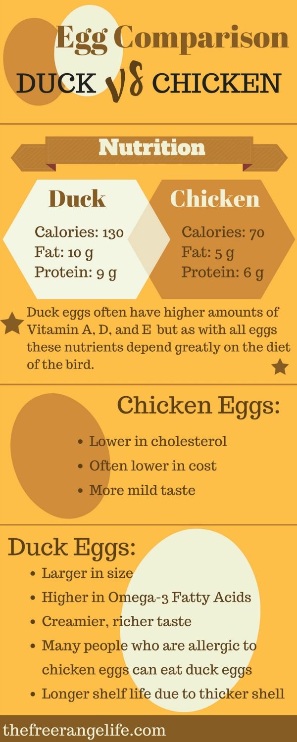 What exactly is the difference between duck eggs and chicken eggs? Find out in this handy infographic: Chicken Eggs vs Duck Eggs!