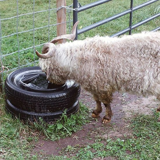 A Cool Use for Tires: How to Keep Livestock Water from Freezing - Homesteading and Livestock - MOTHER EARTH NEWS