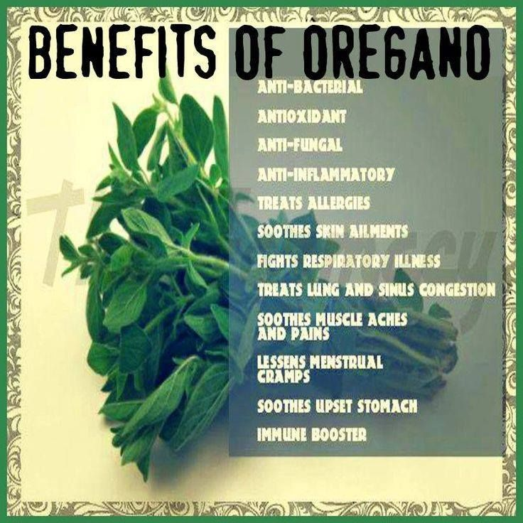 Oregano And Its Benefits Oregano Leaves Are A Good