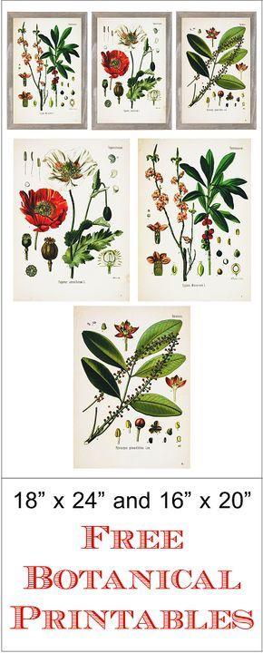 Beautiful botanical printables - free!