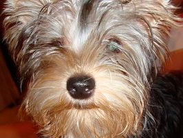 As 5 doenças de pele mais comuns nos cachorros - Dicas e Cuidados
